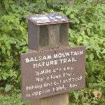 Short but Awesome Trail at entrance to Balsam Mtn Campground