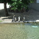 Roosevelt Park Zoo