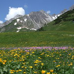  wid flowers above St Anton