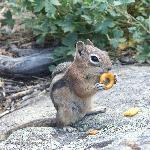 Abundant wild life (friendly chipmunks)