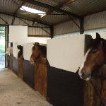 Foto di Muckross Riding Stables B&B