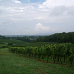 View of the Wolf Mountain vineyard
