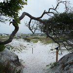 Grayton Beach State Park