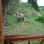 Foto de Lion Sands - Tinga Lodge