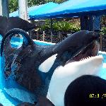  Shamu - Dine with Shamu