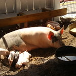 Montgomery County Agricultural Fair
