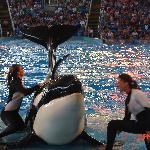 Capturing SeaWorld memories!