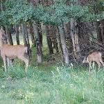  Deer greeted us at Spirit West River Lodge B&amp;B