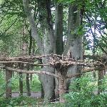  Upside down trees at Culzean