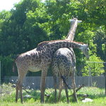 Toledo Zoo