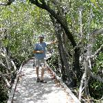 the mangrove trail