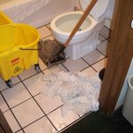 The mop the owner used