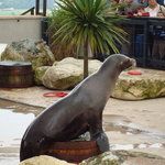 The Sea Lions put on a great show
