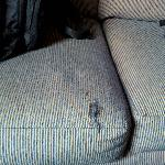  Cat Clawed Couch