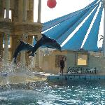  kuadas adaland dolphinpark