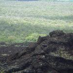 Look closely to see the wild goats on the lava outcropping