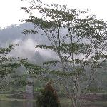 The misty rainforest surround the resort