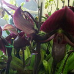 A World of Orchids