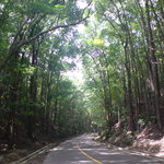 Mahogany Forest