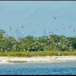 Everglades Area Tours - Day Tours Foto