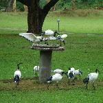 The bird table on the lawn!