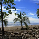 Playa Matapalo