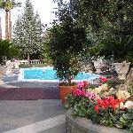 Pool and Grounds