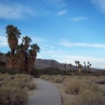 Twentynine Palms Oasis (Oasis of Mara)