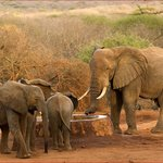 Sheldrick Elephant Orphanage - Ithumba Unit -
