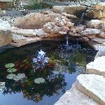  The Koi pond in the Rock Garden