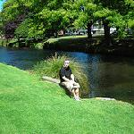 Relaxing by the Avon Christchurch