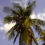Foto Royal Palms