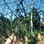 Cactus Plants and Dome