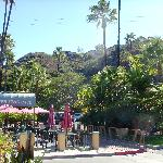 Tropical setting of the hotel