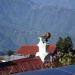 Mayfair Darjeeling Foto
