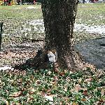 friendly little squirrel in central park