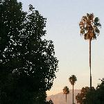  Palms and Mount Wilson from Cal Tech Campus