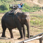 Mae Ping Elephant Village