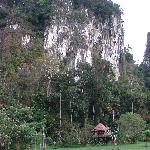 Khao Sok Tree House Resort의 사진