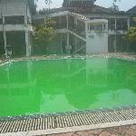  Luminous Green Pool