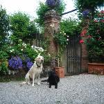 Our dogs at Villa Michaela