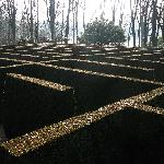 Labyrinth while walking on grounds