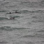 Dolphins at play (right outside the room)