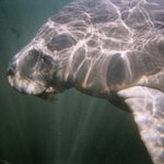 Air Tank Divers Manatee Tours