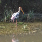 Keoladeo Ghana National Park Foto