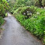  Greenery along the driveway -- so inviting.