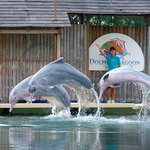 Foto de Underwater World and Dolphin Lagoon