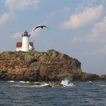 Finestkind Scenic Cruises
