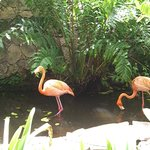 There really are flamingos!