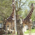 Fresno Chaffee Zoo